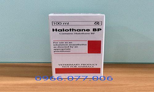 Thuốc Mê Halothane 100ml Dùng Như Thế Nào? Mua Ở Đâu Tốt?