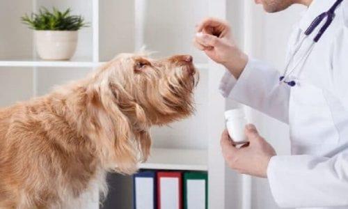Thuốc Mê Cho Chó Có Những Sản Phẩm Nào? Địa Chỉ Nào Có Bán?